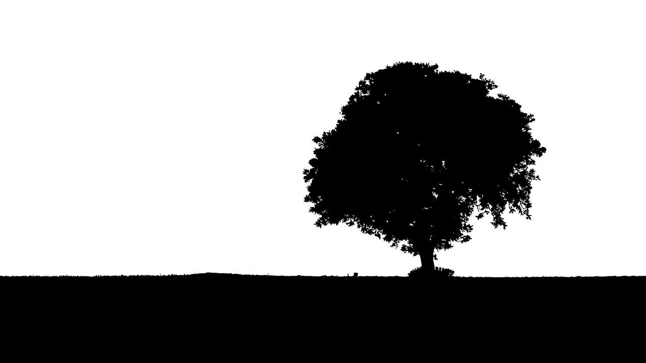 tree-894917_1280